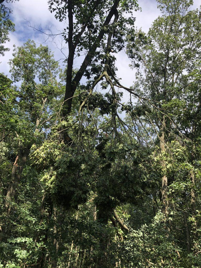 Upside Down Tree Hamscher Homestead