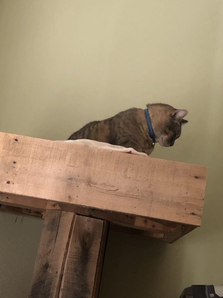 Kitty, Moving days, setup