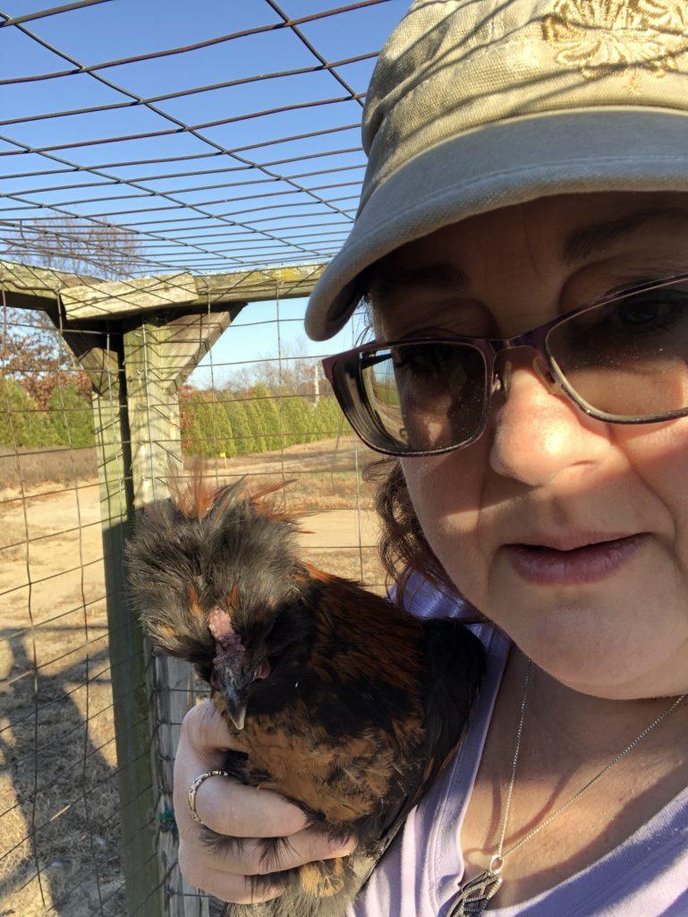 Hamscher Homestead Chickens