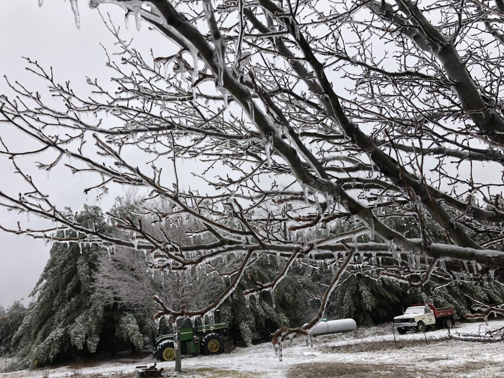 Frozen trees and chickens