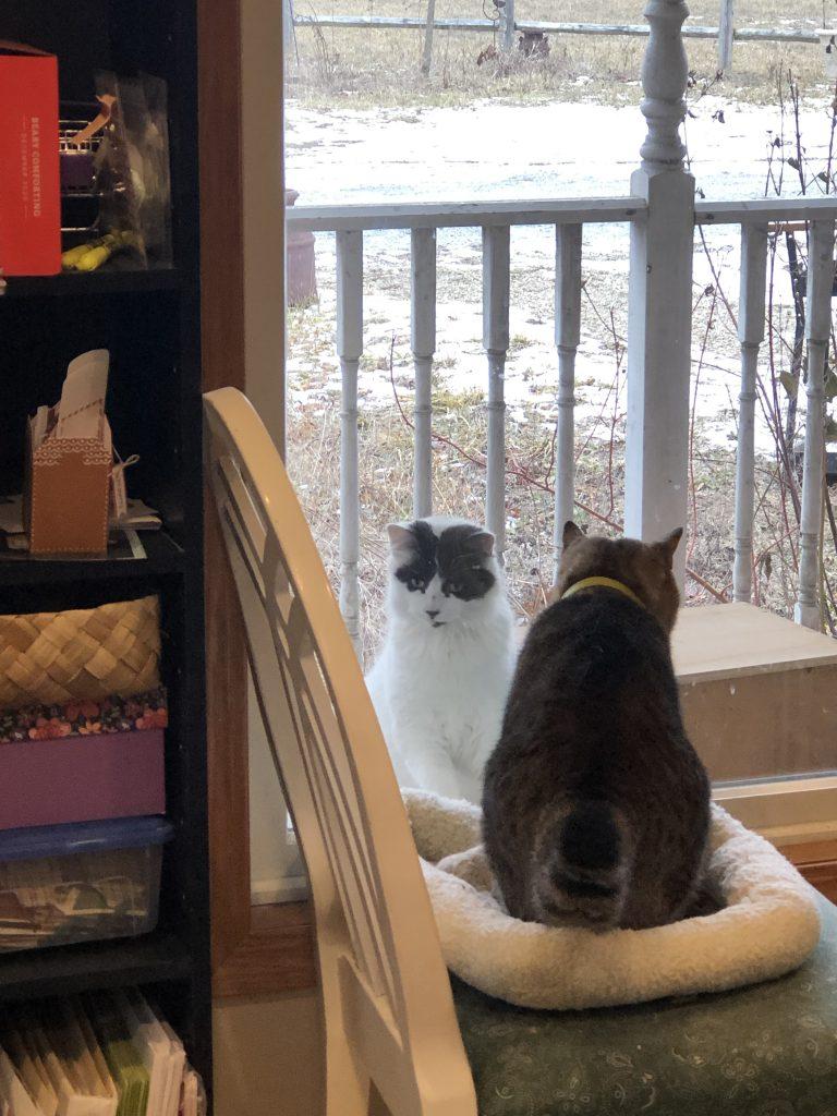 Cuddles Birds and Snow