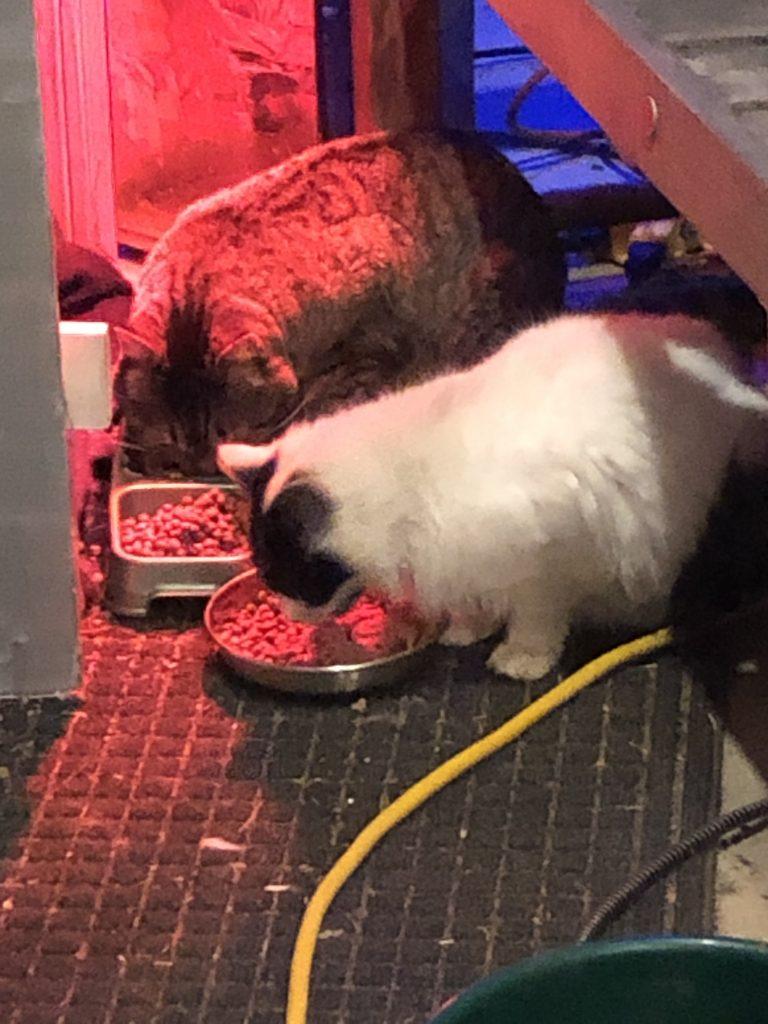 Kitties from the Homestead