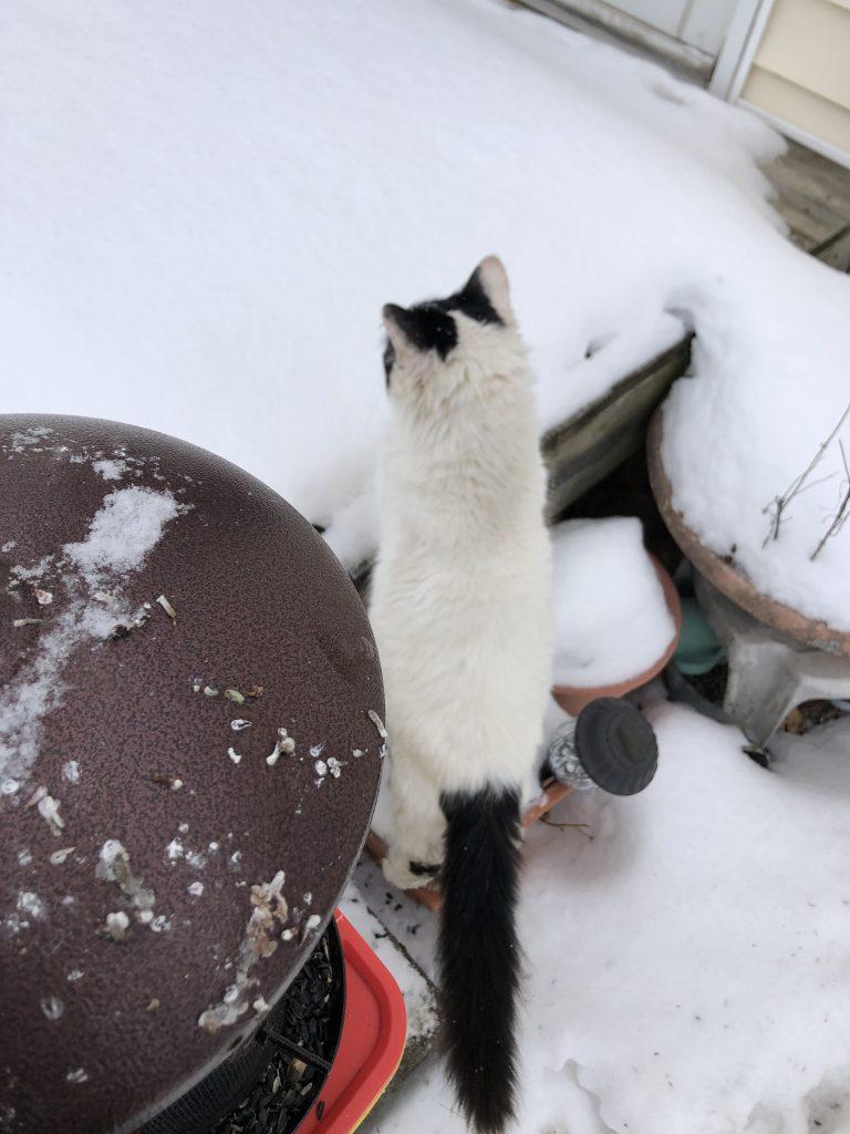 Hamscher Homestead critters