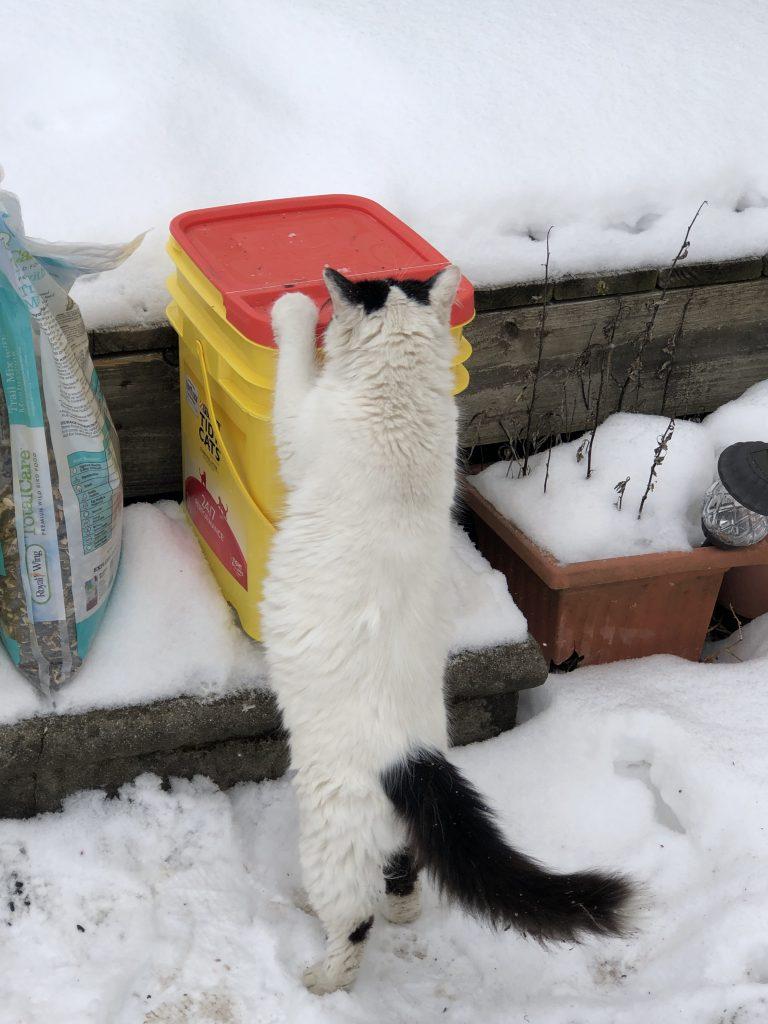 Snow Snoopervisor and Smooches