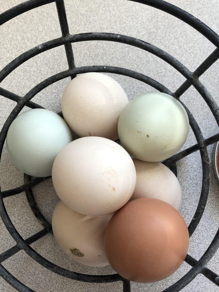 Chicks Kitties and Eggs