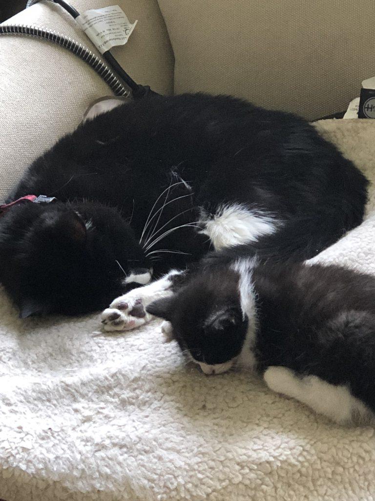 Kittens Mooch Spring Decorations