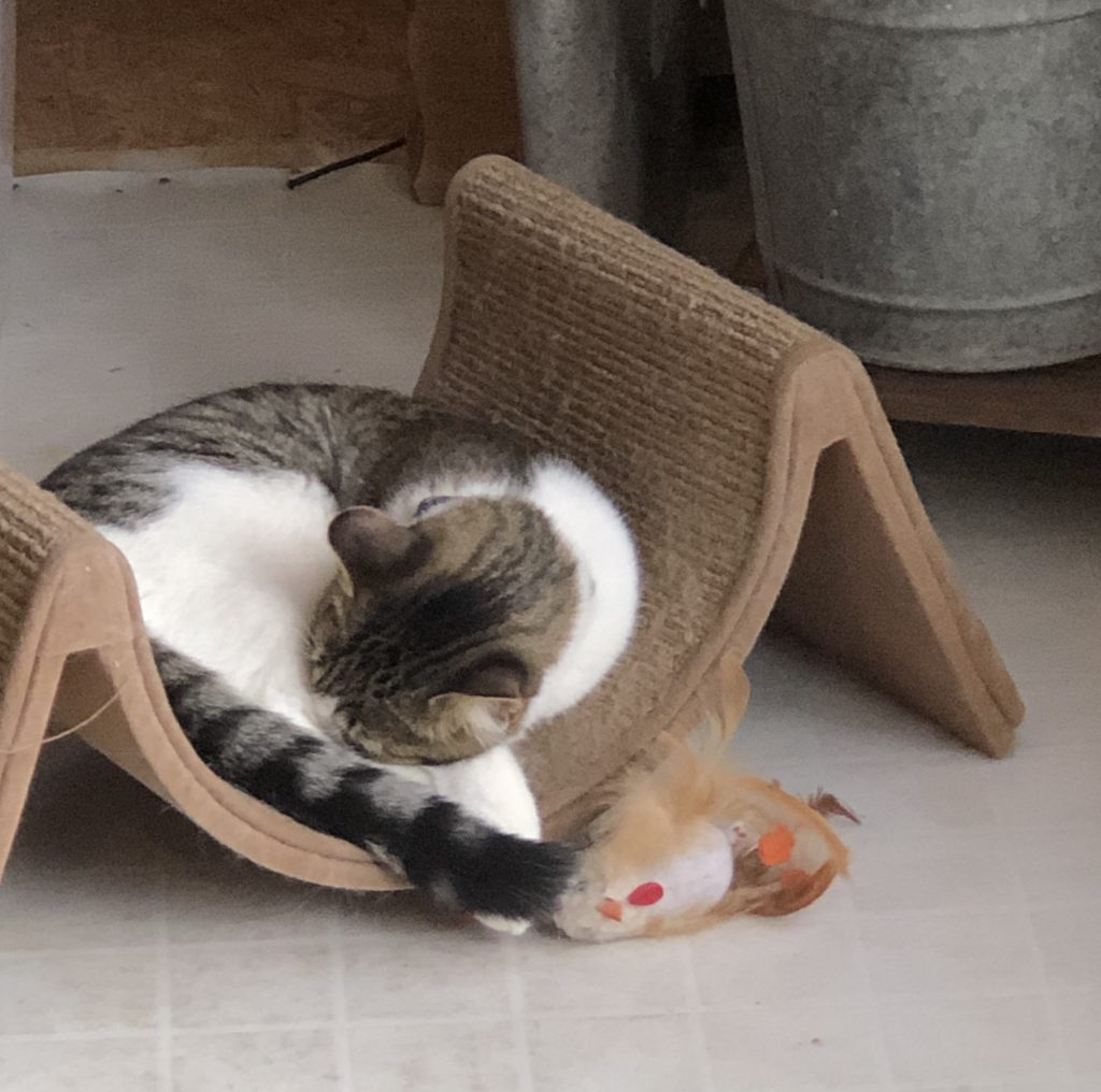 Kitties need Wood and Decor